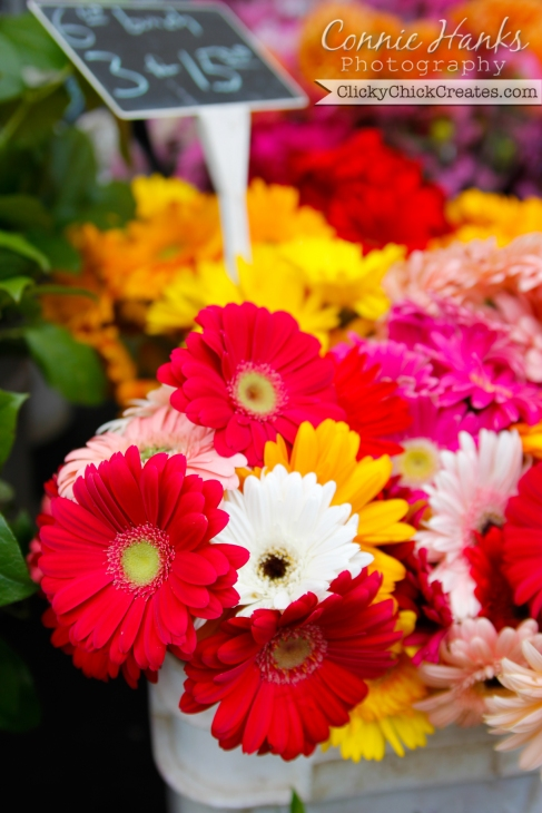 Connie Hanks Photography  //  ClickyChickCreates.com  //  fresh gerber daisy flowers at farmer's market
