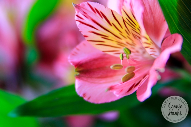 Connie Hanks Photography // ClickyChickCreates.com // pink flower