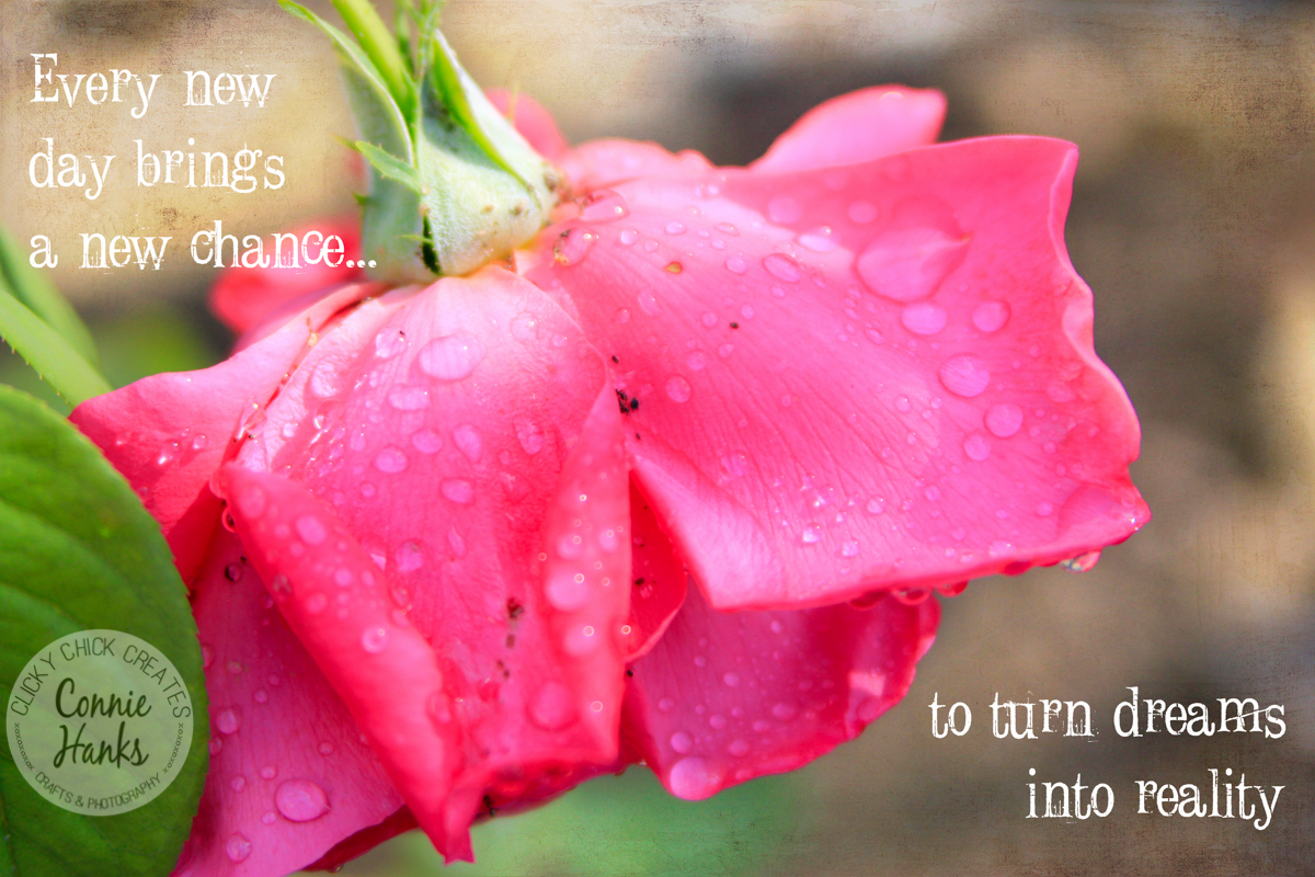 """Connie Hanks Photography // ClickyChickCreates.com // pink rose with quote """"every new day brings a new chance to turn dreams into reality"""""""