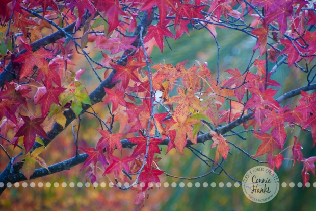 Connie Hanks Photography // ClickyChickCreates.com // fall leaves, foliage, autumn, colors, beautiful, nature, organic