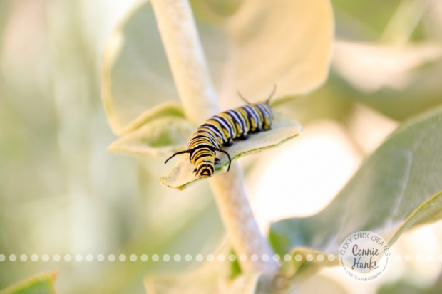 Connie Hanks Photography // ClickyChickCreates.com // caterpillars of Balboa Park