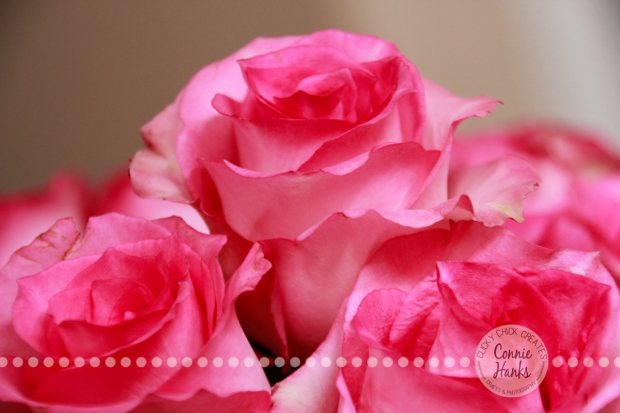 Connie Hanks Photography // ClickyChickCreates.com // soft pink roses