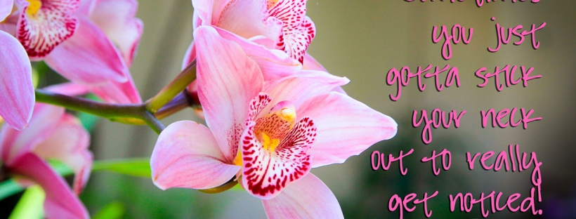 Connie Hanks Photography // ClickyChickCreates.com // Vibrant pink orchids in Balboa Park Botanical Building with quote Sometimes you just gotta stick your neck out to really get noticed