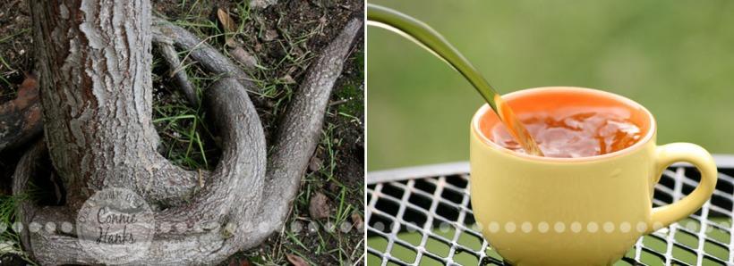 Connie Hanks Photography // ClickyChickCreates.com // Diptych - Tea, Nature, Earth - exposed roots, tangled, tea, backyard