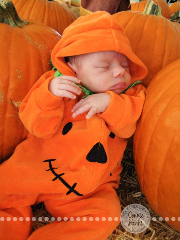 Connie Hanks Photography // ClickyChickCreates.com // baby pumpkin