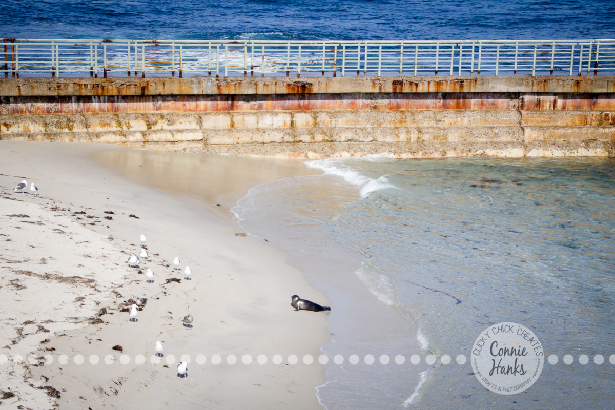 Connie Hanks Photography // ClickyChickCreates.com // La Jolla, beach, photography, San Diego, cove, morning, waves, crashing, seal