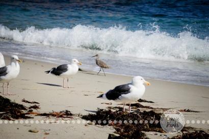 Connie Hanks Photography // ClickyChickCreates.com // La Jolla, beach, photography, San Diego, cove, morning, waves, crashing