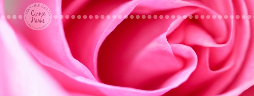 Connie Hanks Photography // ClickyChickCreates.com // macro shot of pink rose, natural light, curves, petals