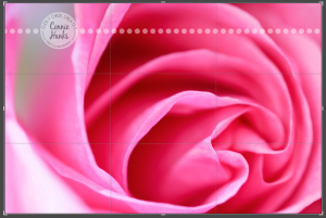 Connie Hanks Photography // ClickyChickCreates.com // macro shot of pink rose, natural light, curves, petals, rule of thirds
