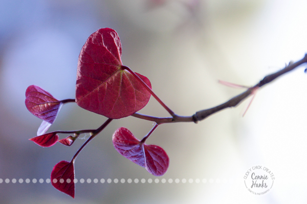 Connie Hanks Photography // ClickyChickCreates.com // heart shaped leaf