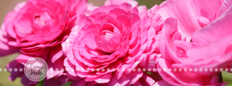 Connie Hanks Photography // ClickyChickCreates.com // macro flower photography